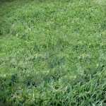 Grass full hd