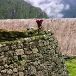 Machu Picchu hd photos