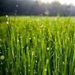 Grass widescreen