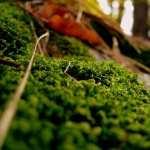 Moss pic