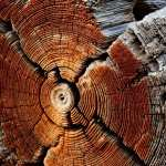 Wood high definition wallpapers