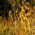 Grass hd pics