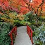 Japanese Garden download wallpaper