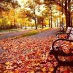 Bench high definition wallpapers