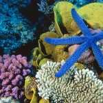 Great Barrier Reef new wallpapers