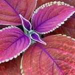 Plant 1080p