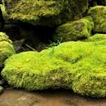 Moss download