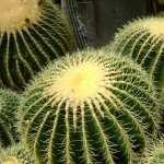 Cactus desktop