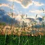 Grass pics