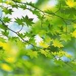Leaf free wallpapers