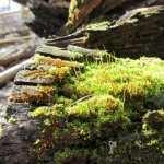 Moss full hd