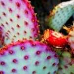 Cactus hd
