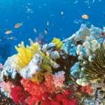 Great Barrier Reef full hd