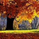 Fall hd photos