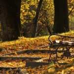 Bench new wallpapers