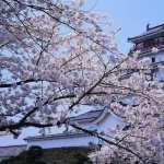 Himeji Castle hd desktop