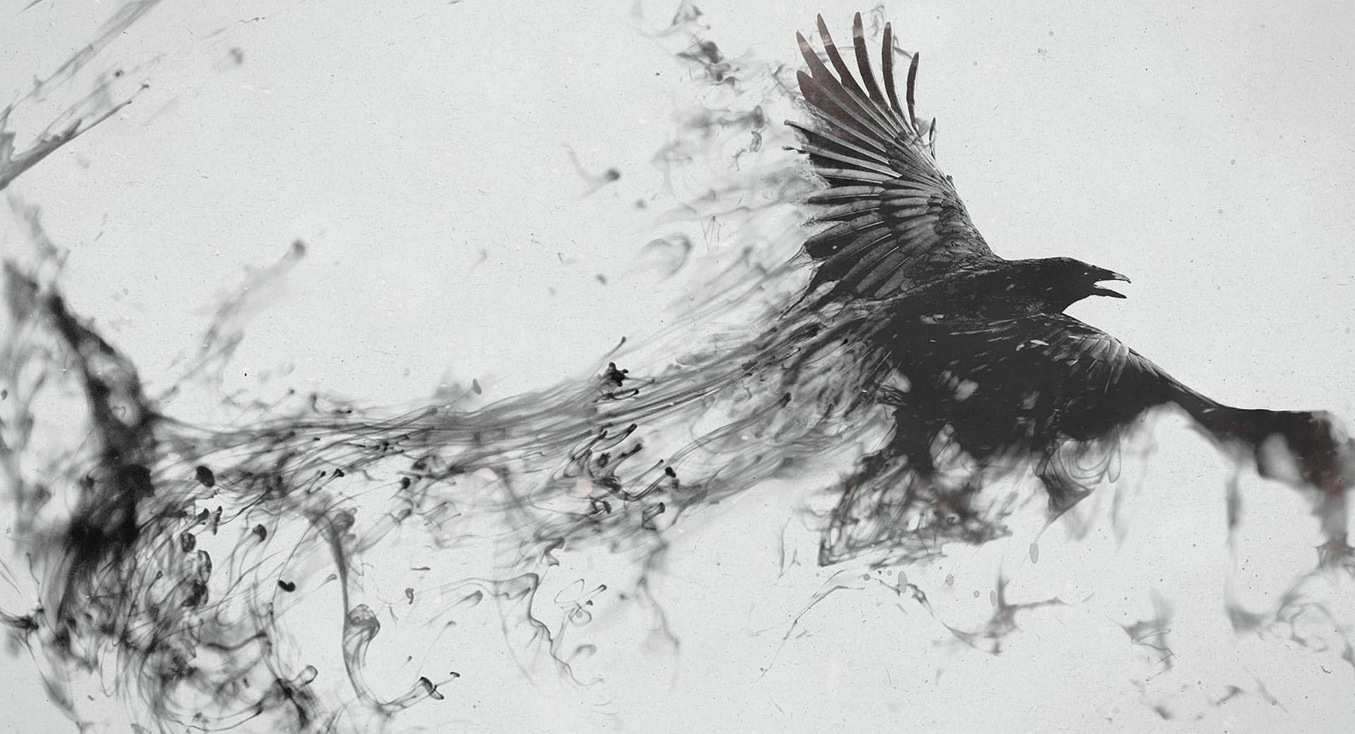 Abstract Bird wallpapers HD quality