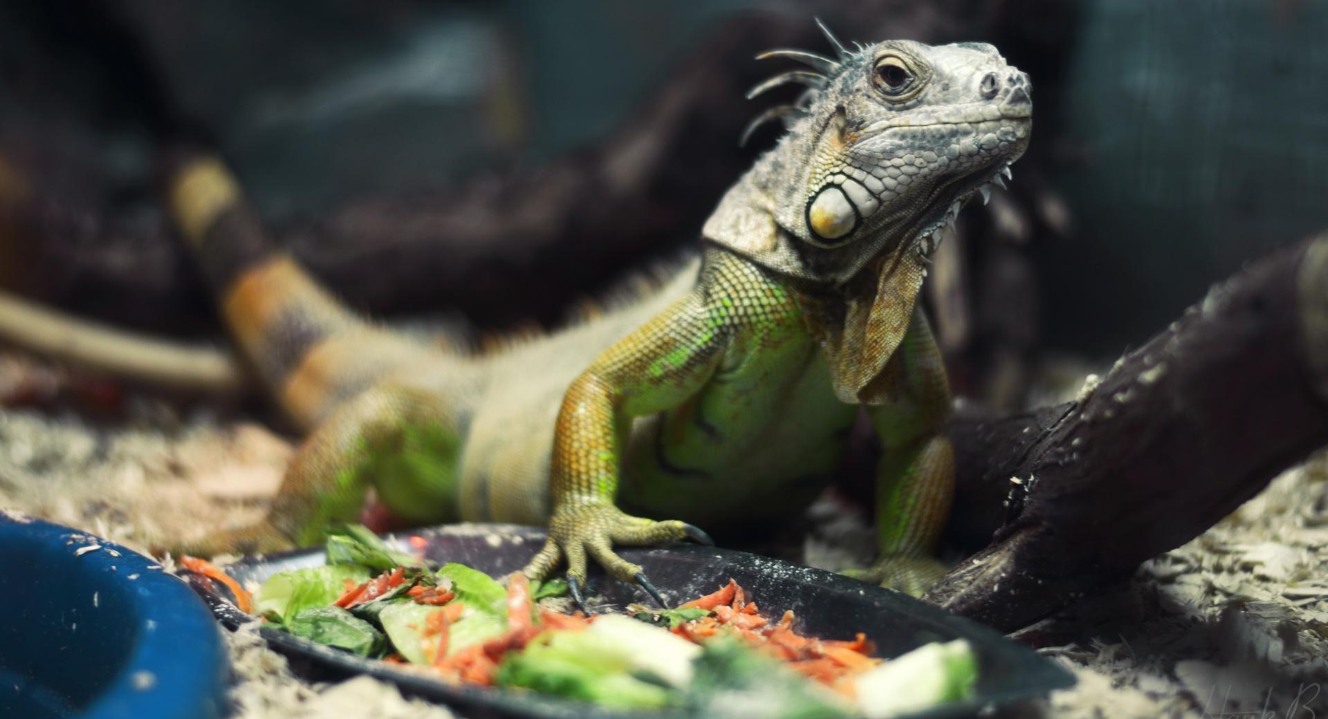 природа животные рептилия  № 234967 без смс