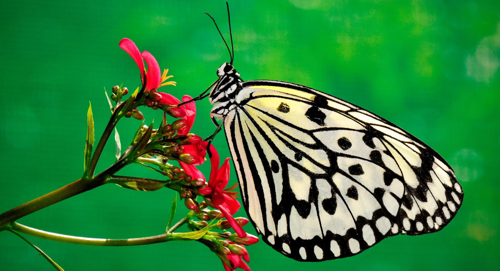 Butterfly, Nature wallpapers HD quality