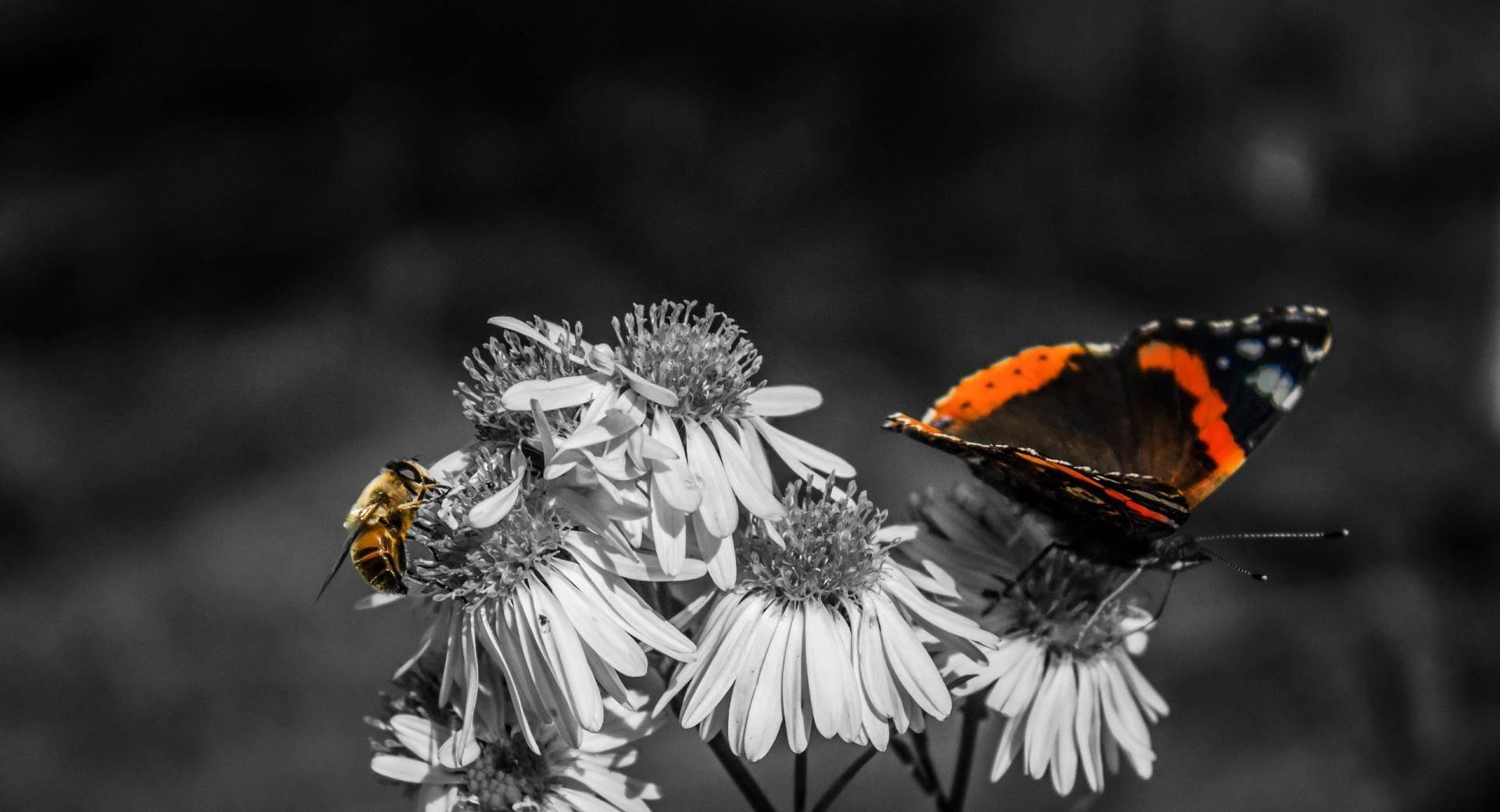 Butterfly - Bee wallpapers HD quality