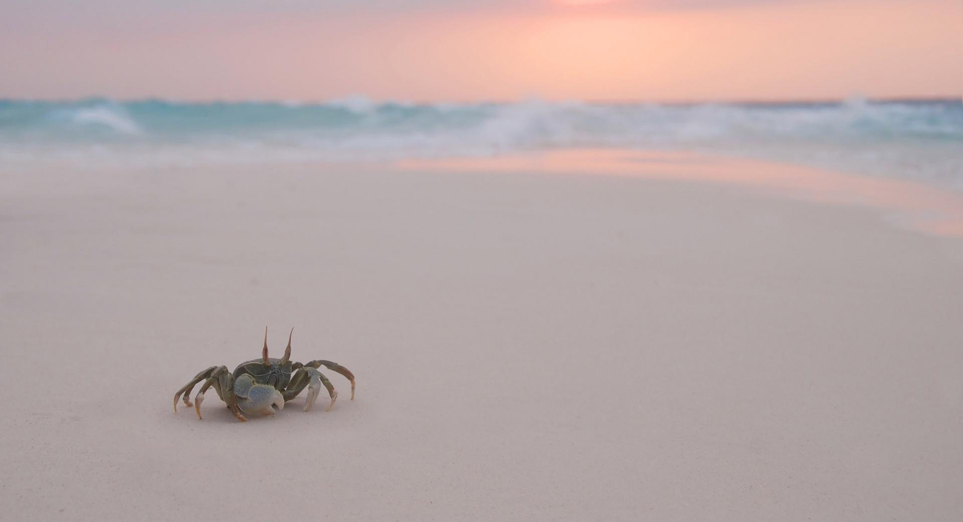 Crab On Beach wallpapers HD quality