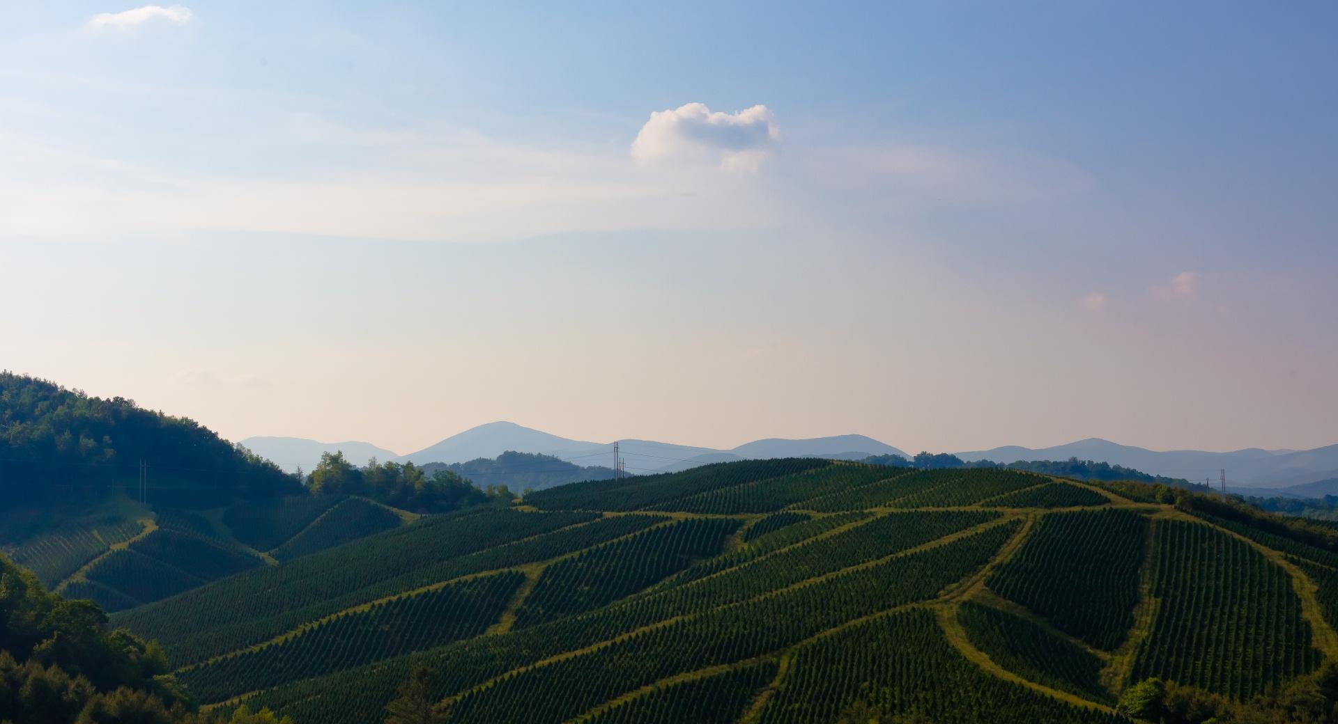 Evergreen Ridge wallpapers HD quality