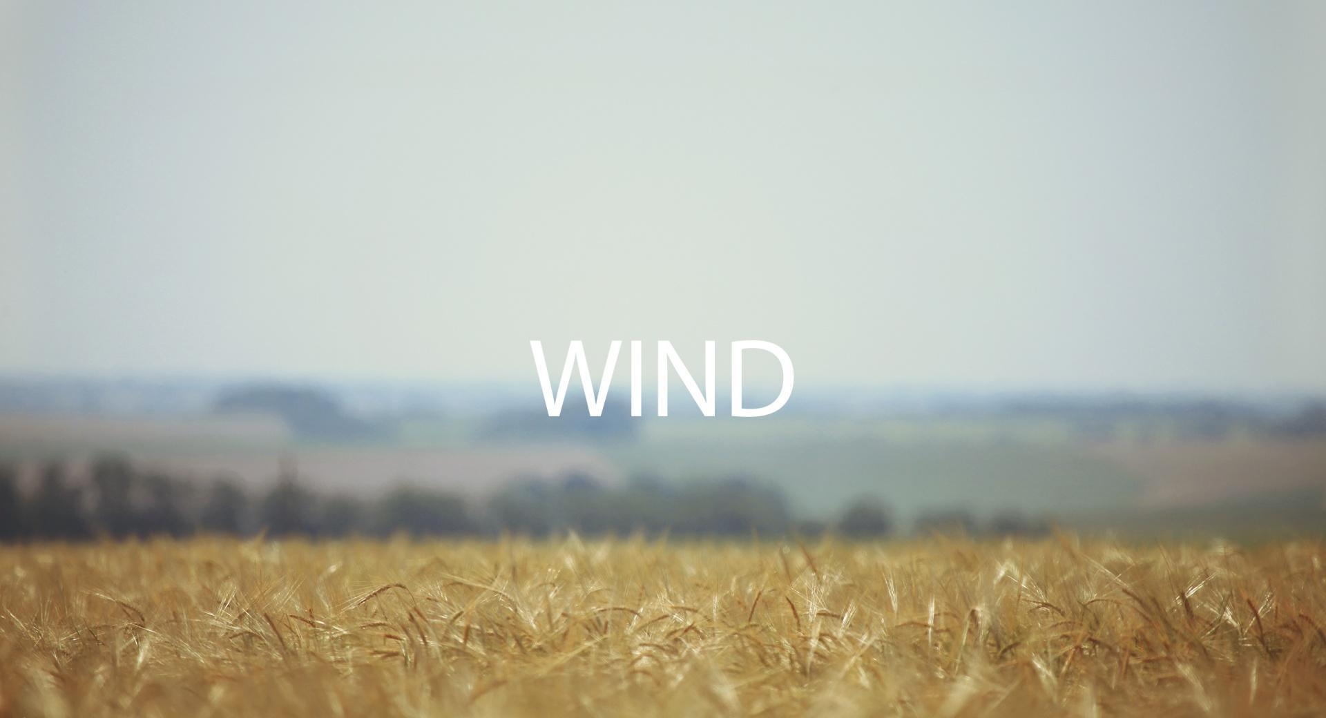 Field Wind wallpapers HD quality