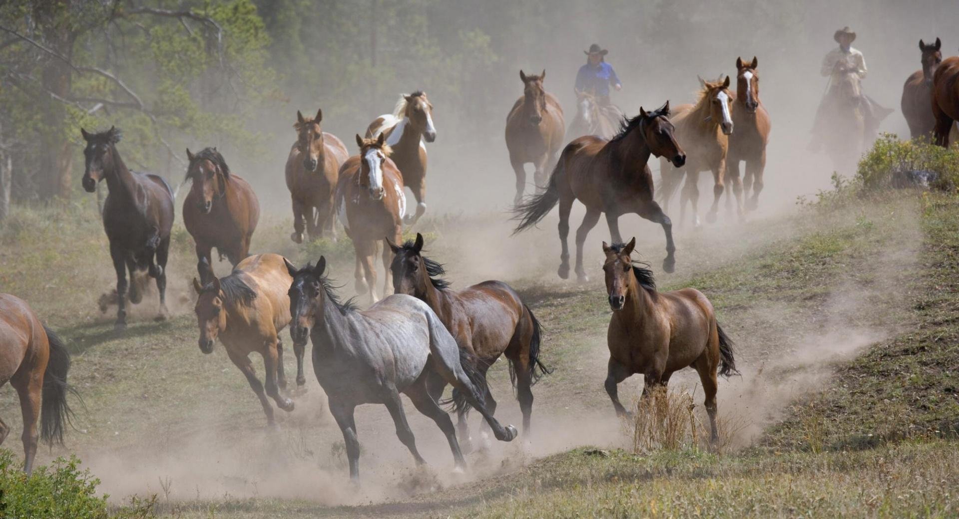 Horse Roundup Montana wallpapers HD quality