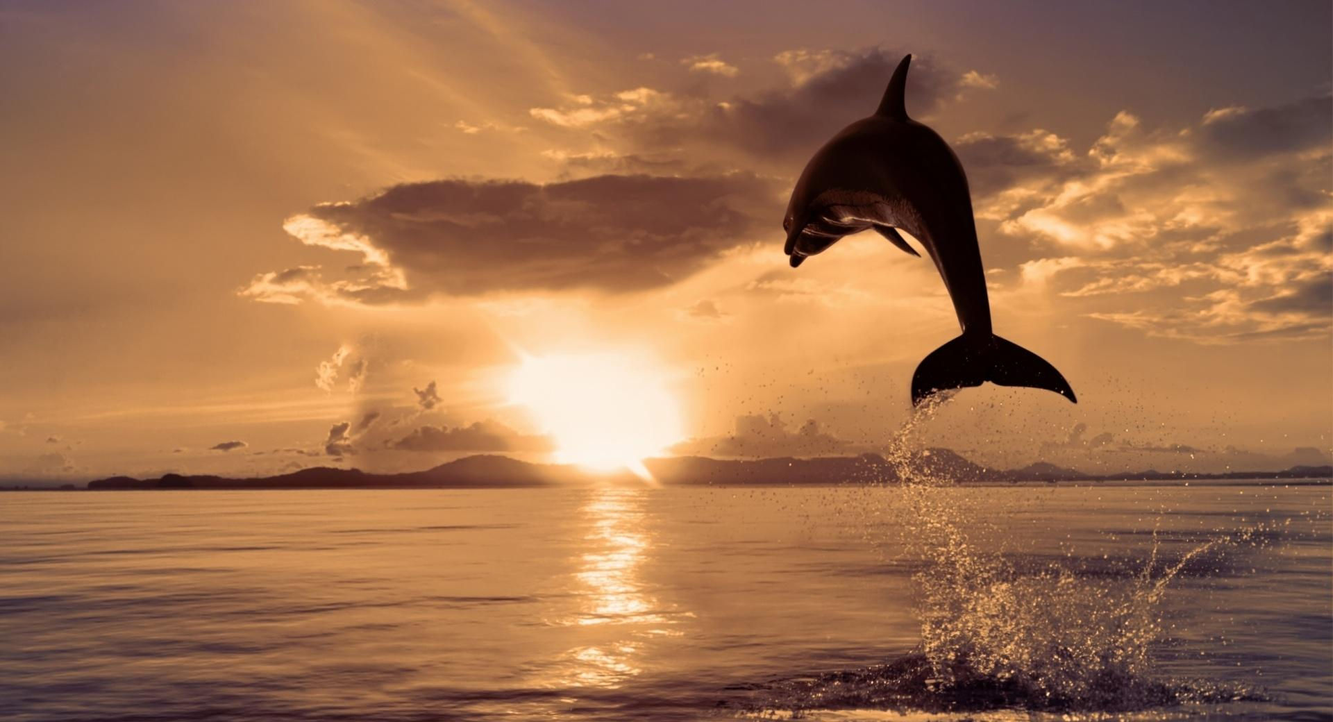Jumping Dolphin wallpapers HD quality