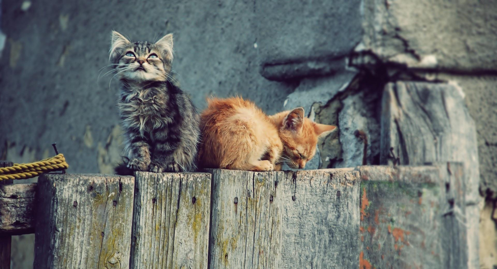 Lost Kittens wallpapers HD quality