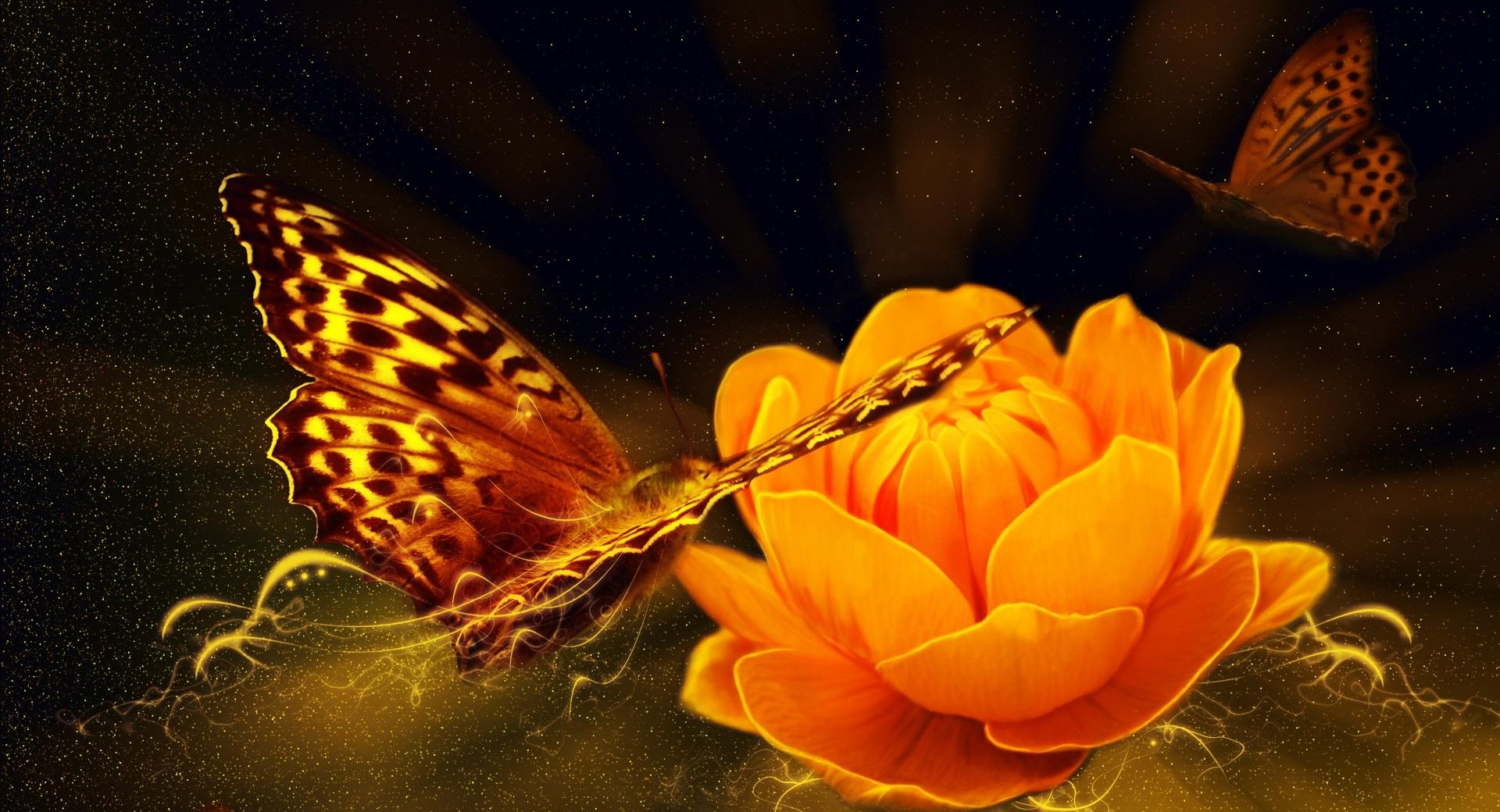 Magic Butterfly wallpapers HD quality