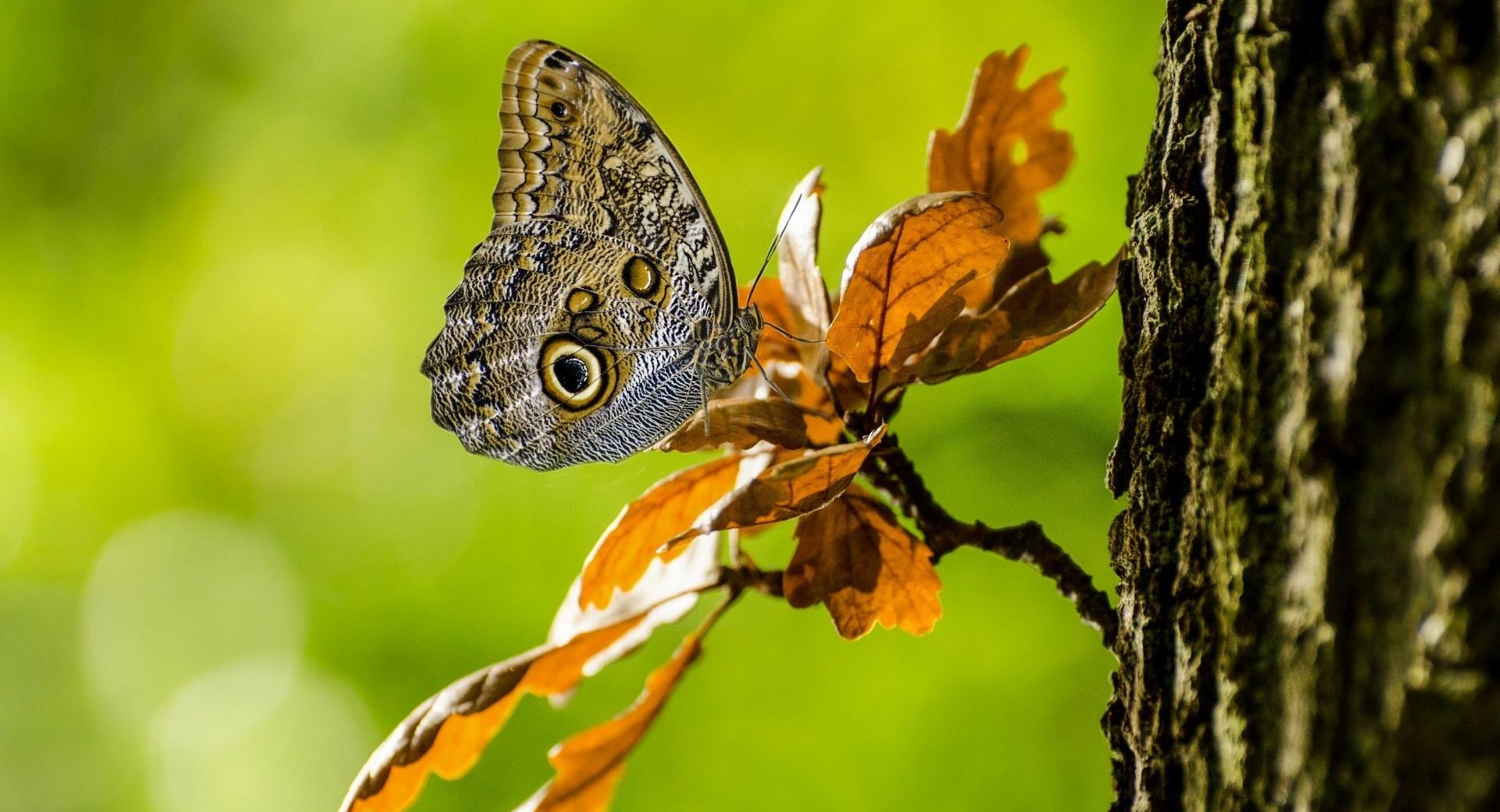 Owl Butterfly wallpapers HD quality