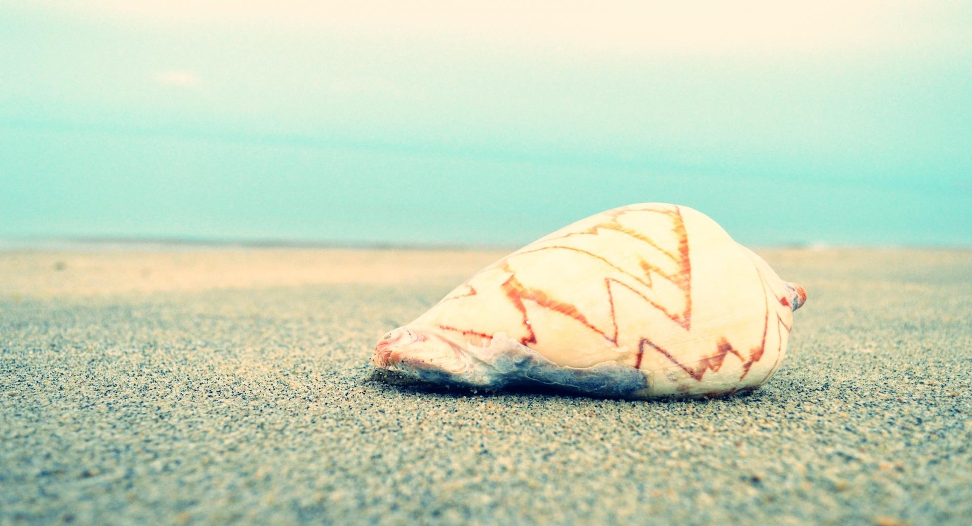 Sand N Shell wallpapers HD quality