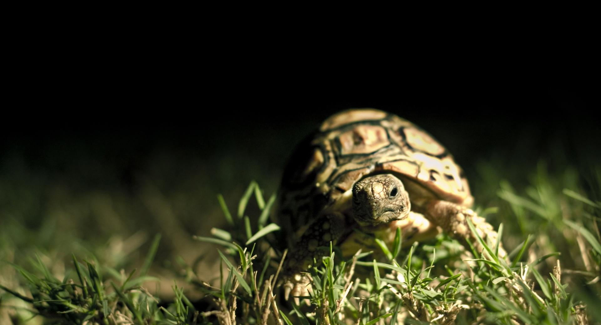 Turtle Close Up wallpapers HD quality