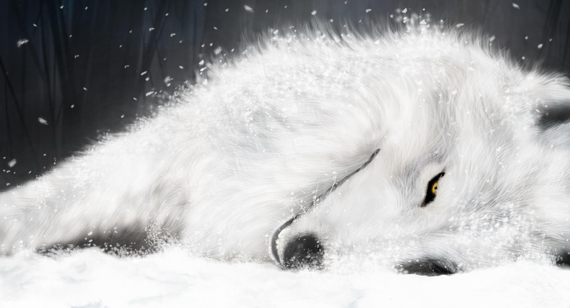 White Fantasy Wolf wallpapers HD quality