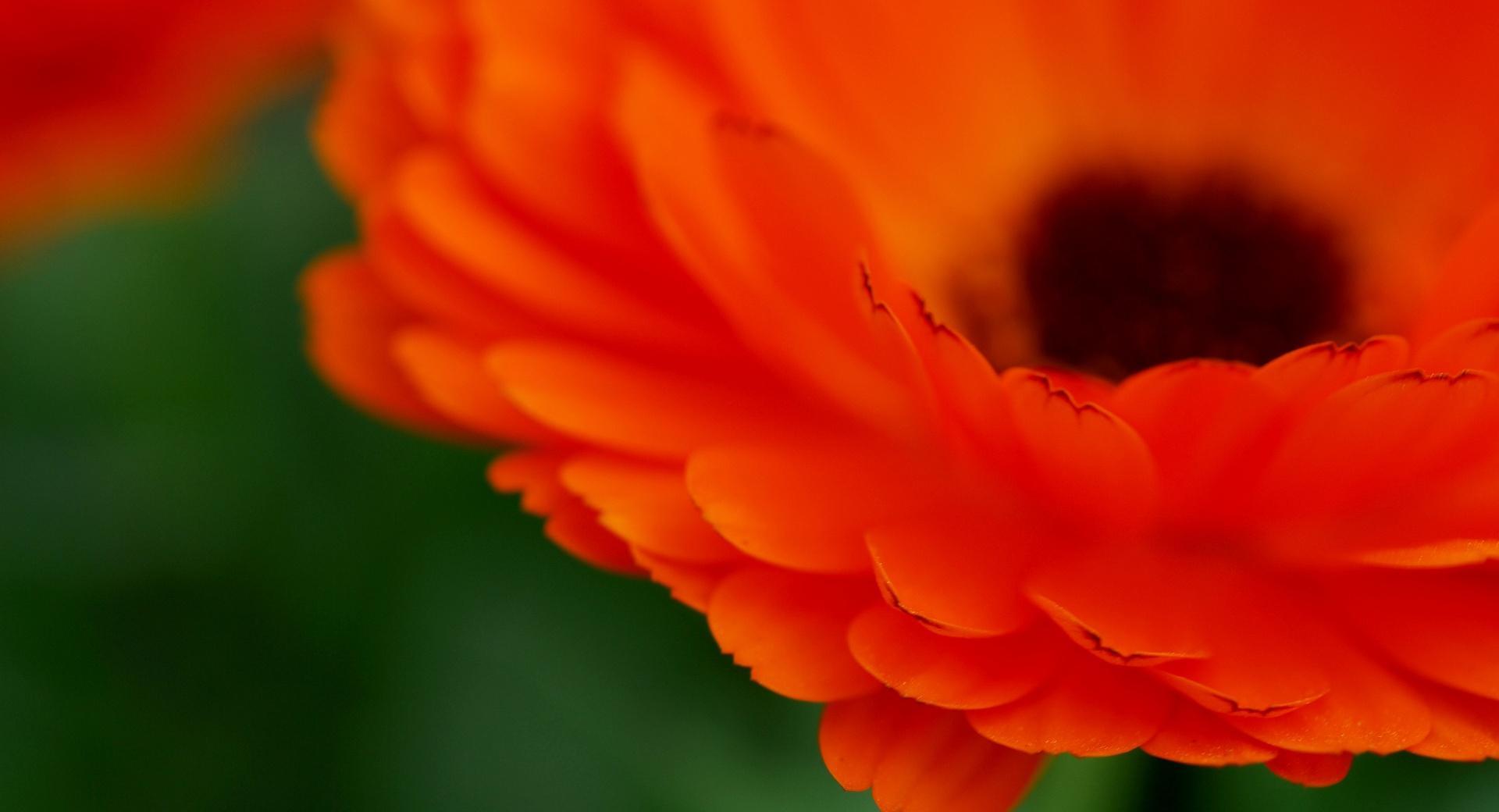 Красные цветы макро скачать