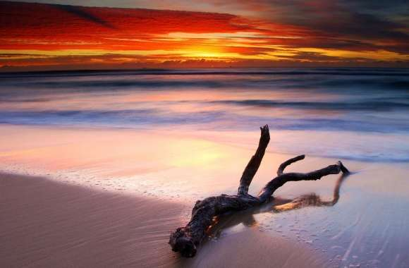 Driftwood And Spectacular Sunset