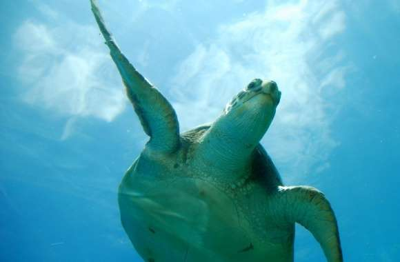 Flying in the sky wallpapers hd quality