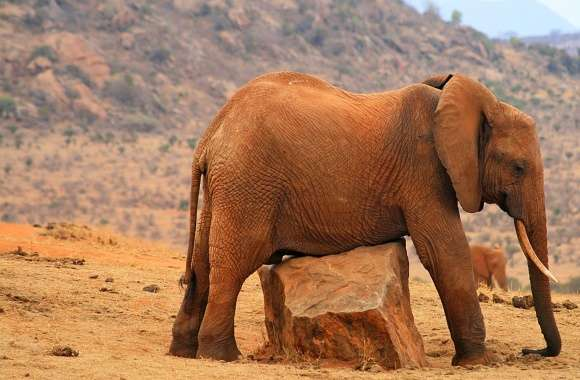 Grounded Elephant