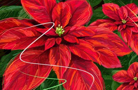 Hand Drawn Poinsettia wallpapers hd quality