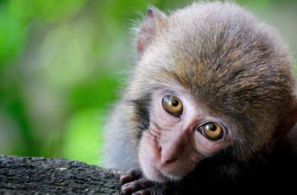 Monkey Big Eyes