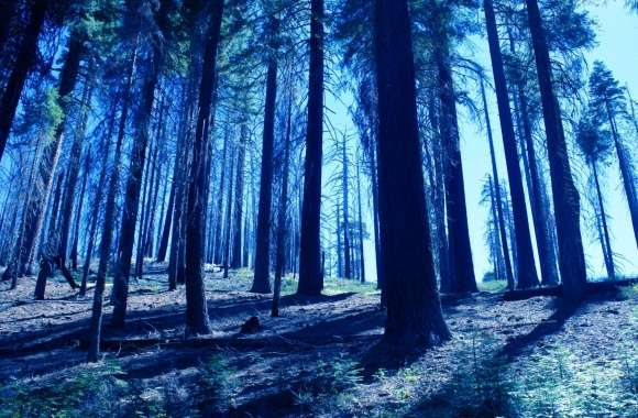 Night Trees Blue