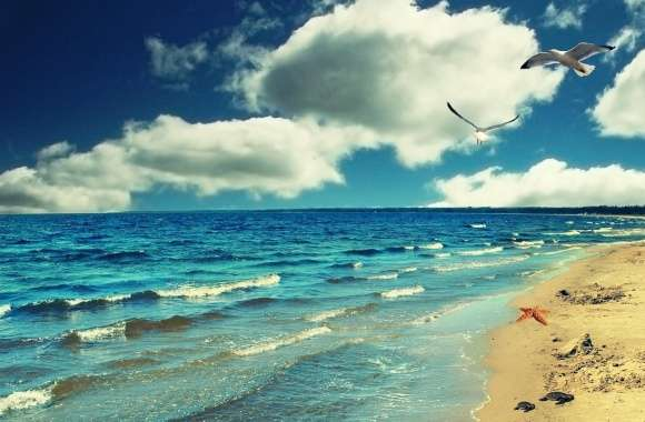 Perfect Ocean Beach - Birds wallpapers hd quality