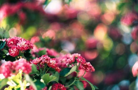 Pink Blossom And Green Bokeh