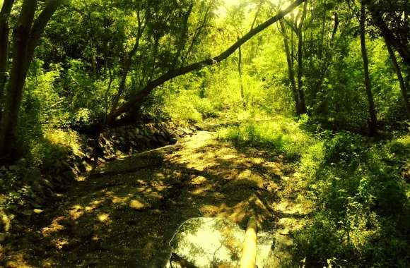THE ENCHANTED FOREST_Chayan Mehta wallpapers hd quality