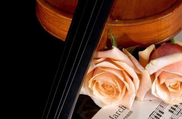 Violin And Peach Roses wallpapers hd quality