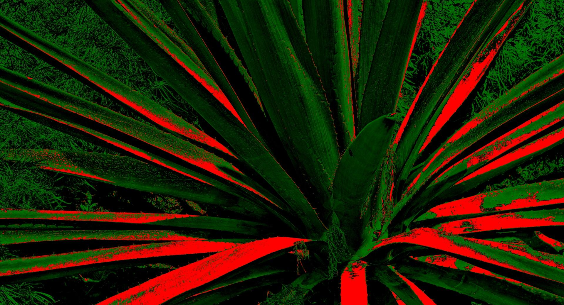 Abstract Cactus wallpapers HD quality