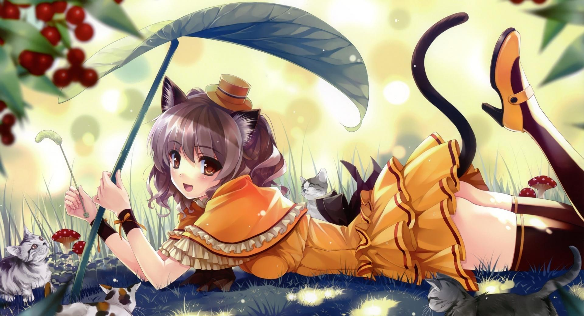 Anime Kittens wallpapers HD quality
