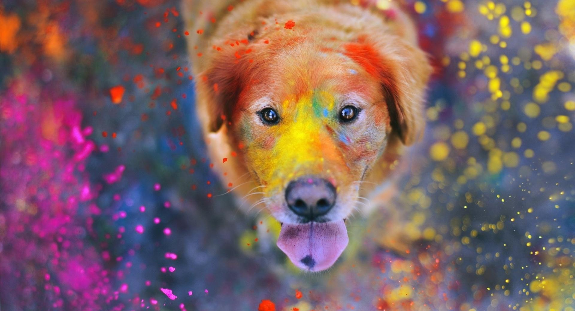 Colorful Dust wallpapers HD quality