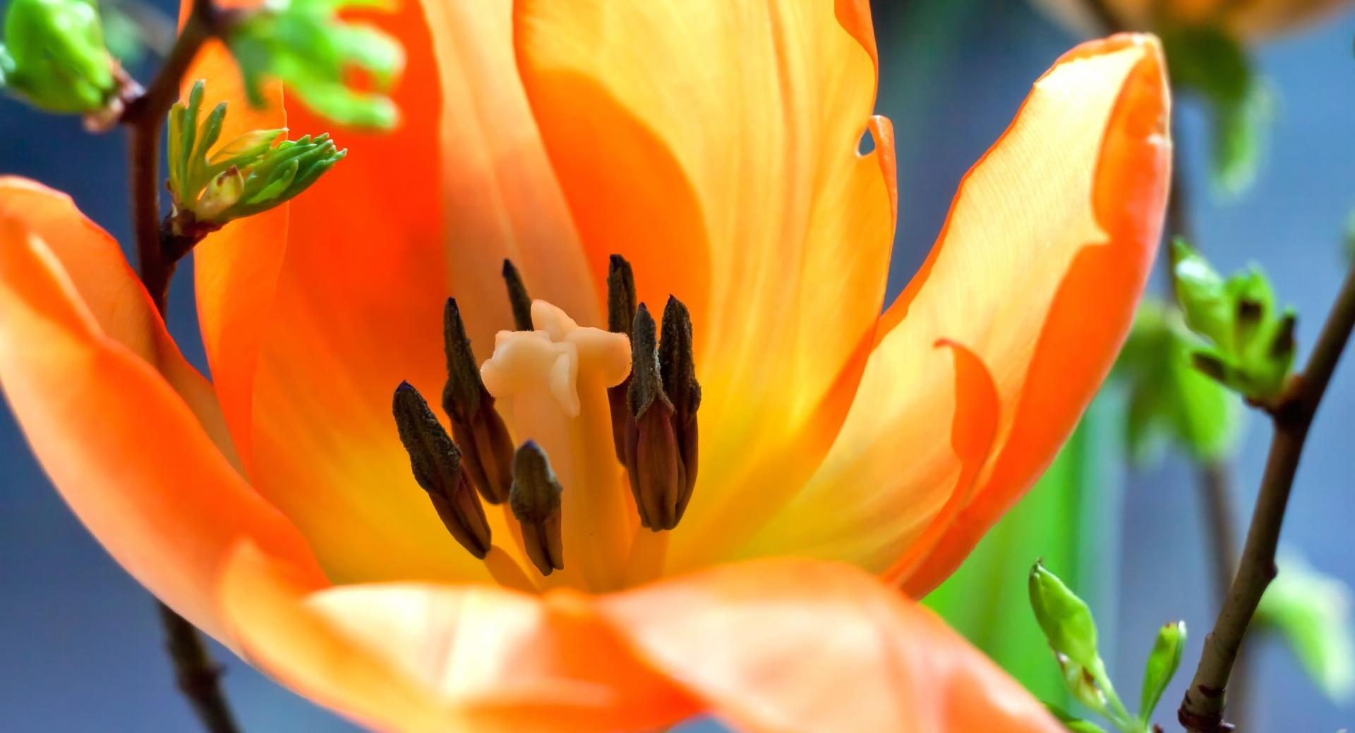 Easter Flower Background 2016 wallpapers HD quality